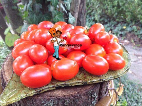 Taiwan Goddess Tomato 2019