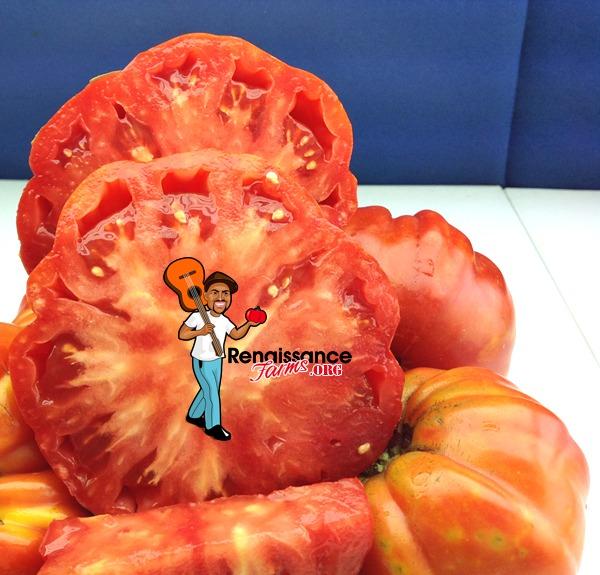 Tomato Marmande Garnier Rouge