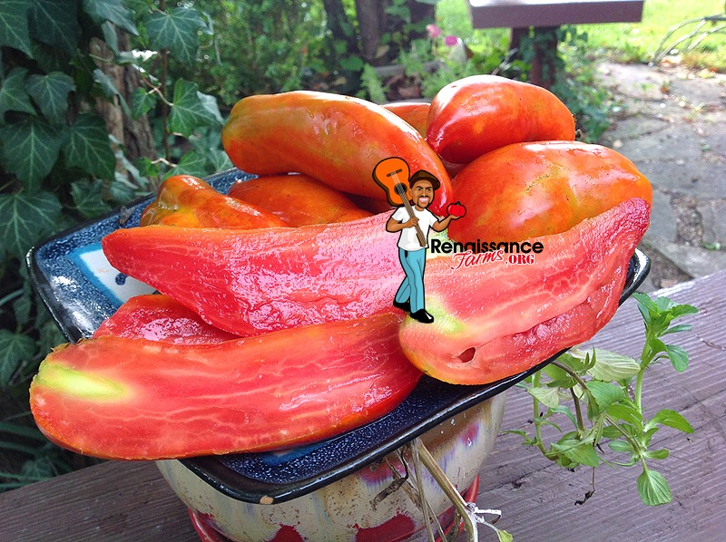 Tomato Polish Linguisa