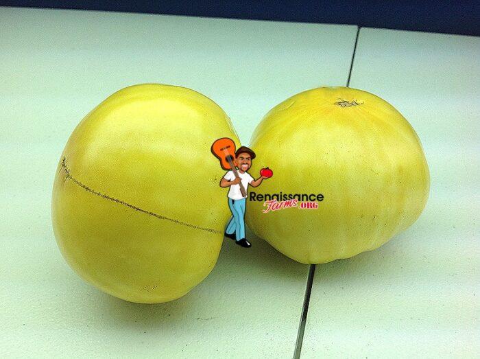 Tom's Wonder Tomato Seeds