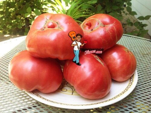 Tsarskiy Podarok Tomato