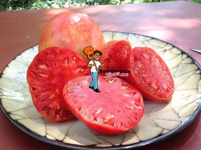 Velmahoza Magnate Oxheart Tomato