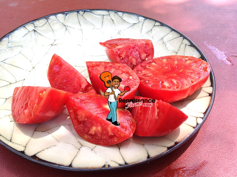 Velmahoza-Magnate-Tomato