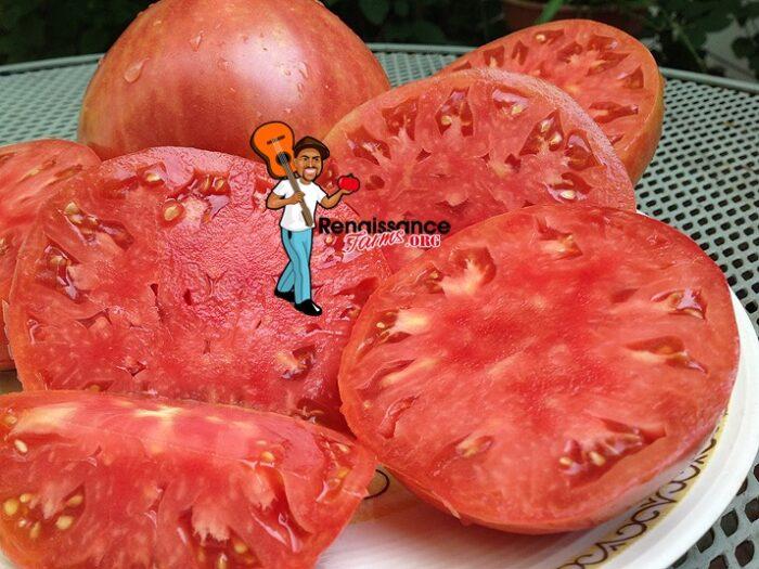 Velmahoza Magnate Tomato