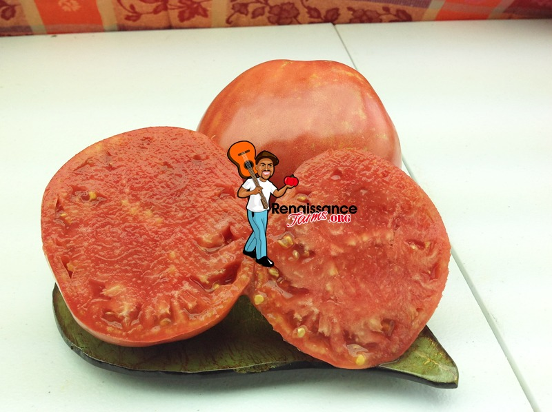 Velmahoza Magnate Tomato Pictures