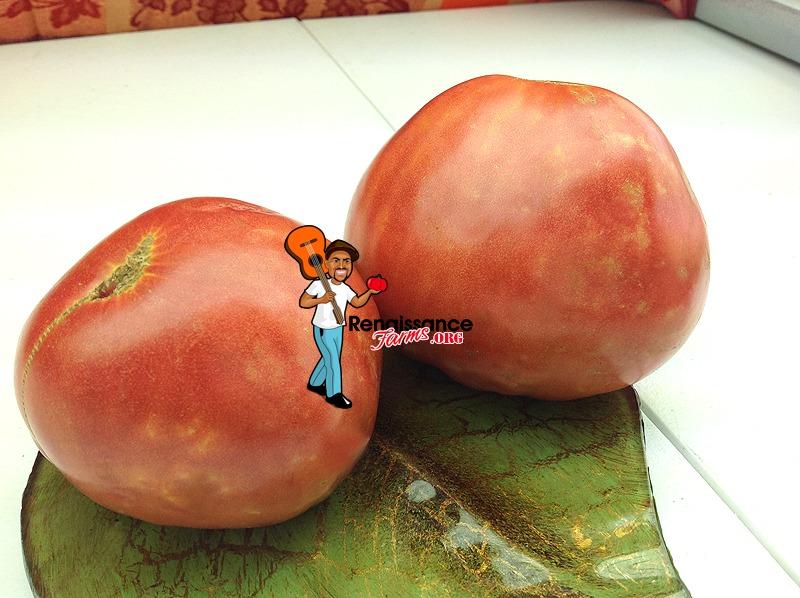 Velmahoza Magnate Tomatoes