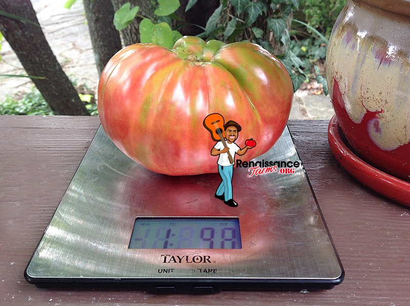 Whetstone Wonder Tomato 2019