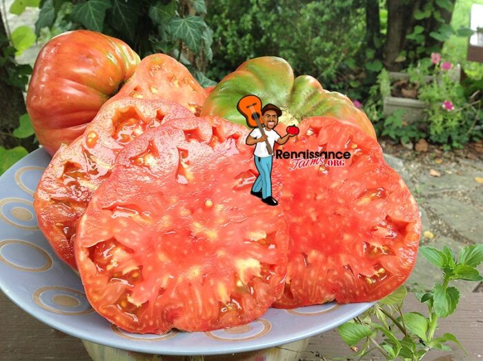 Whetstone-Wonder-Tomato