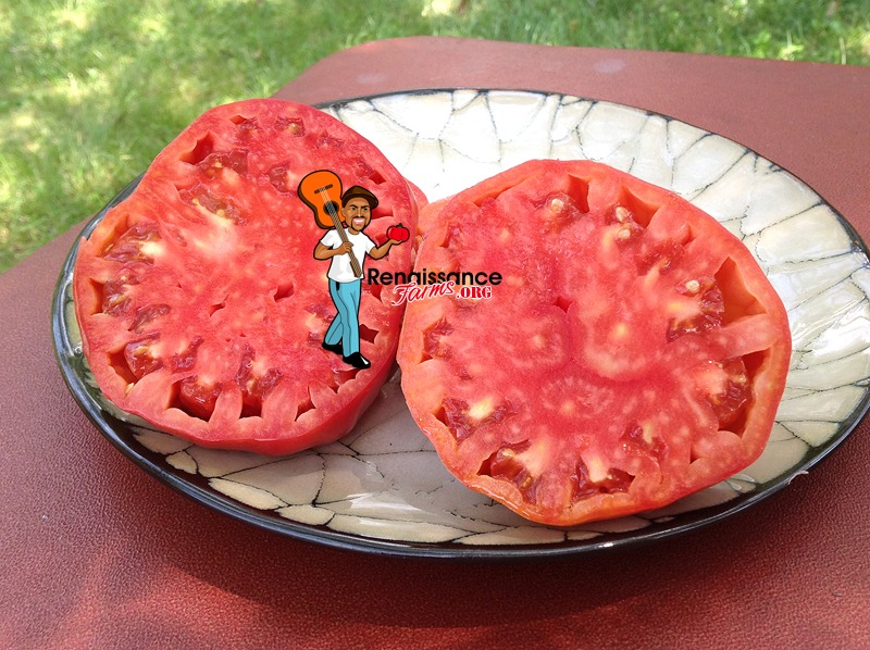 Whetstone Wonder Tomato 2018