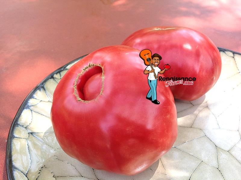 Whetstone Wonder Tomato