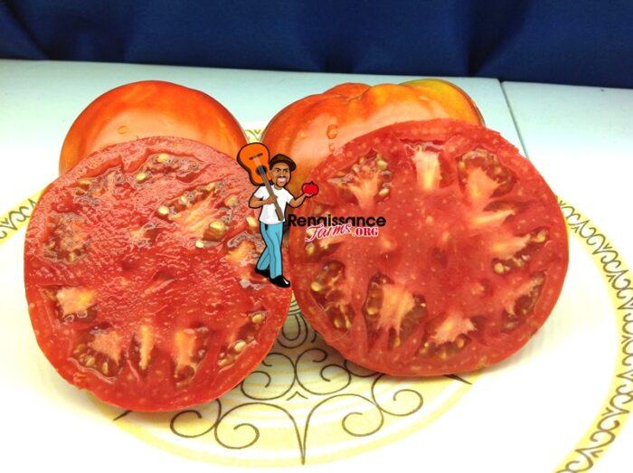 Whetstone-Wonder-Tomatoes