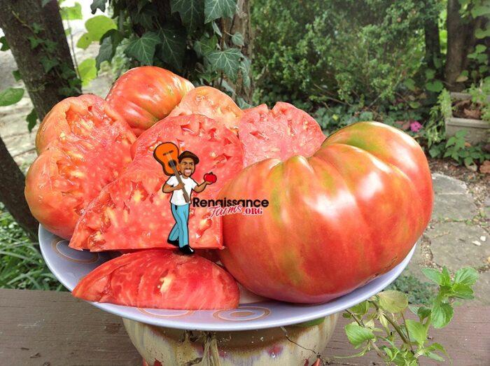Whetstone_Wonder_Tomato