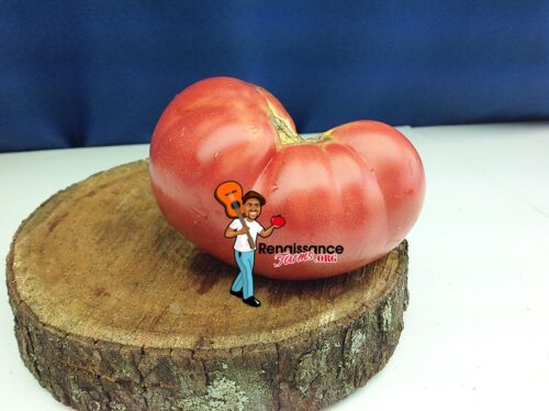 Willa's Cariboo Rose Tomato