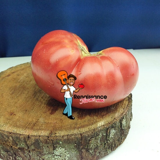 Willa's Cariboo Rose Tomato