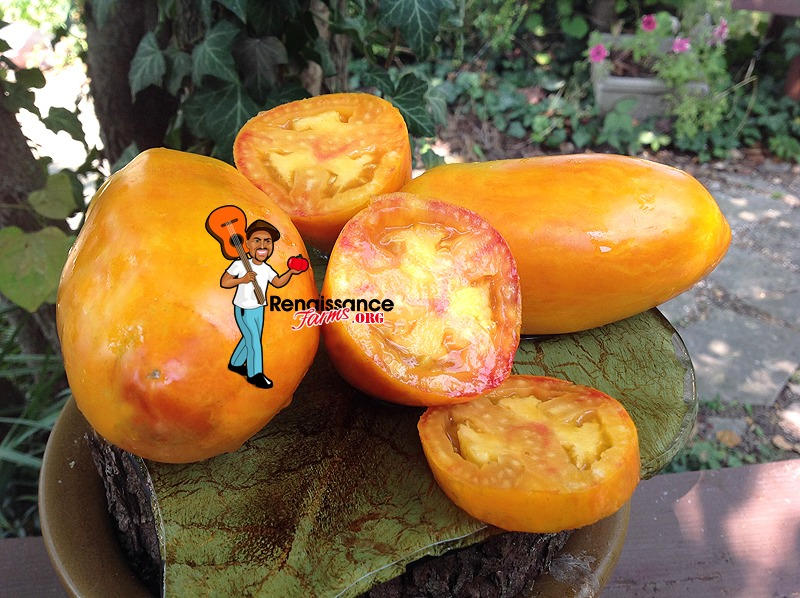 Yellow Fire Tomato Images