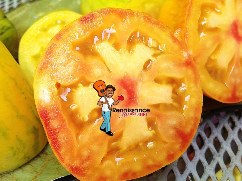 Yellow Fire tomato 2019