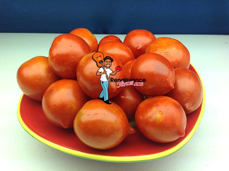 Yubileyny Tarasenko Tomato 2018