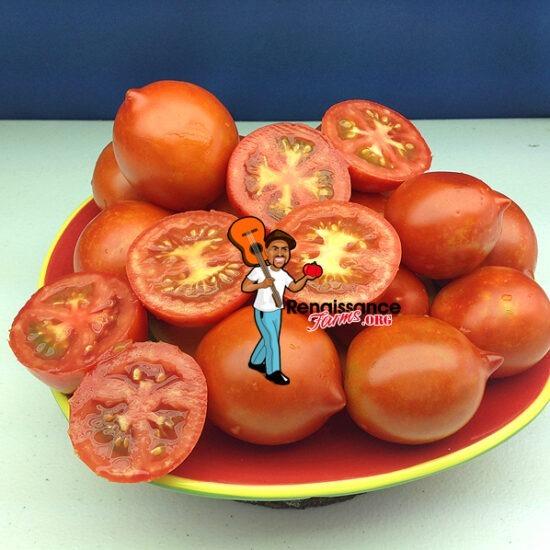 Yubileyny Tarasenko Tomato