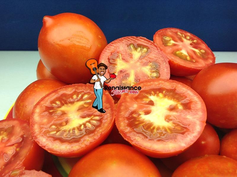 Yubileyny Tarasenko Tomato Seeds