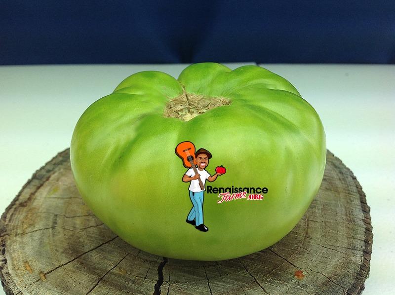 Dwarf-Jackass-Green-Tomato