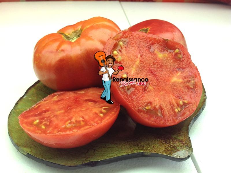 Sweet Adelaide Dwarf Tomato