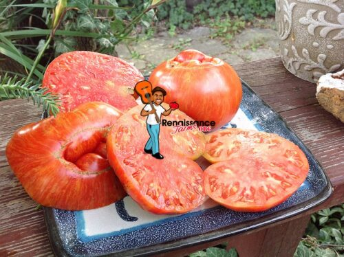 Large Heart Tiger Stripe Tomato 2019