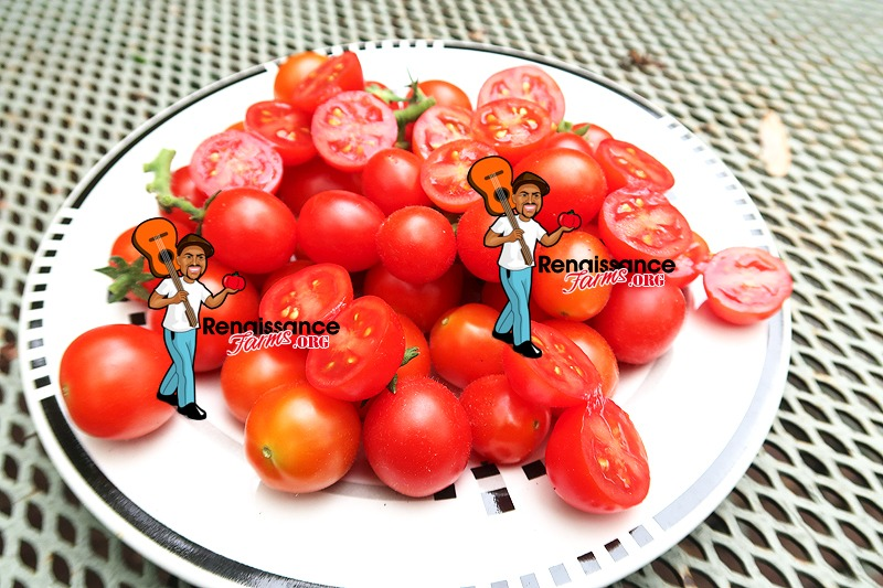 Curly Kaley Tomato On Plate