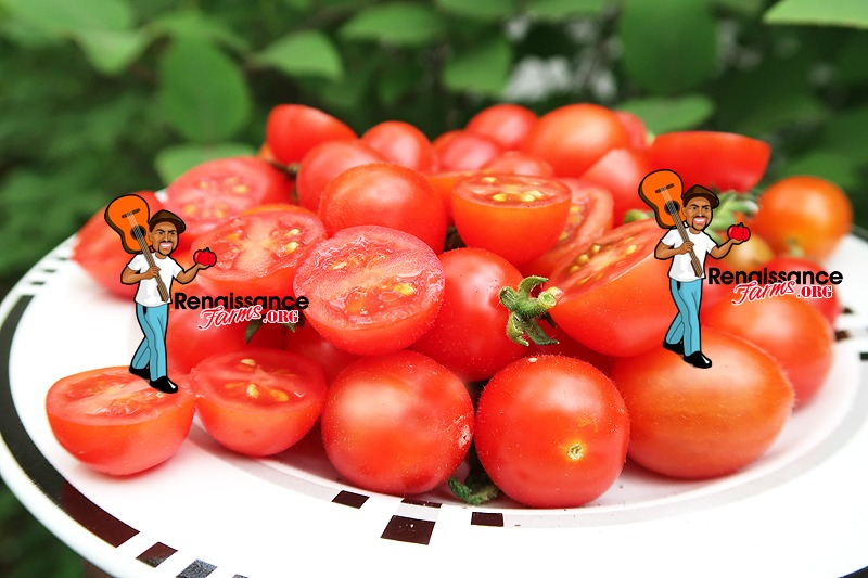 Curly Kaley Tomato