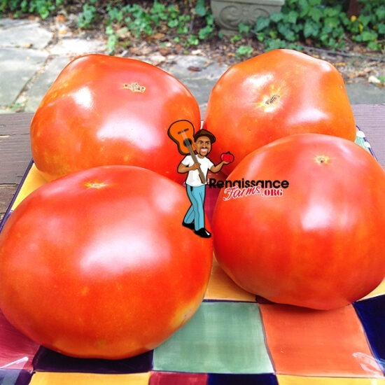 Abe Lincoln Tomatoes