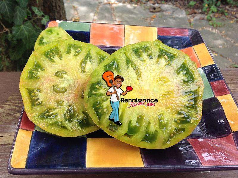 Ananas Zebra Tomato