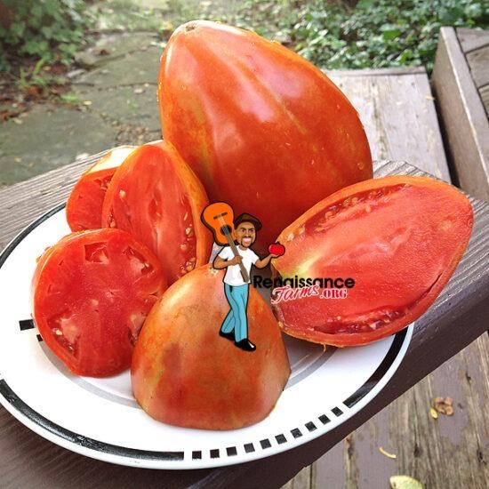 Aunt Swarlo's Polish Plum Tomato