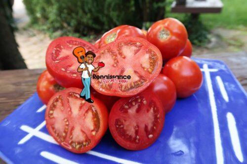 Barby Tomato