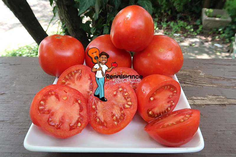 Barby tomato on white plate