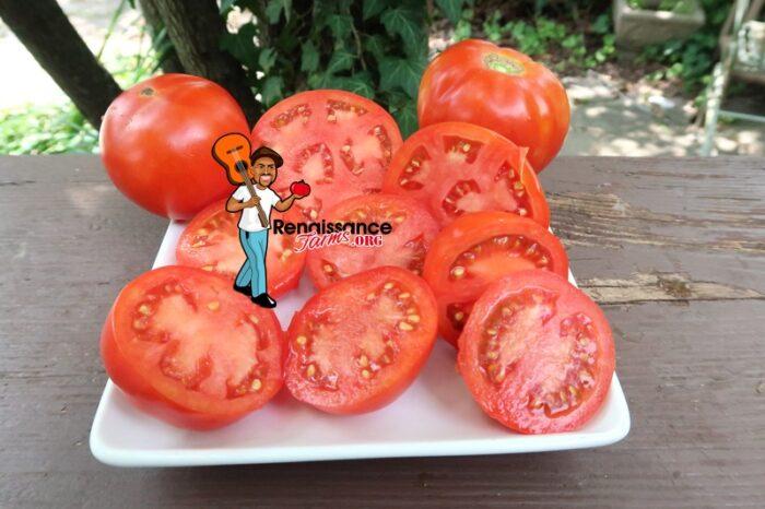 Barby tomato slices
