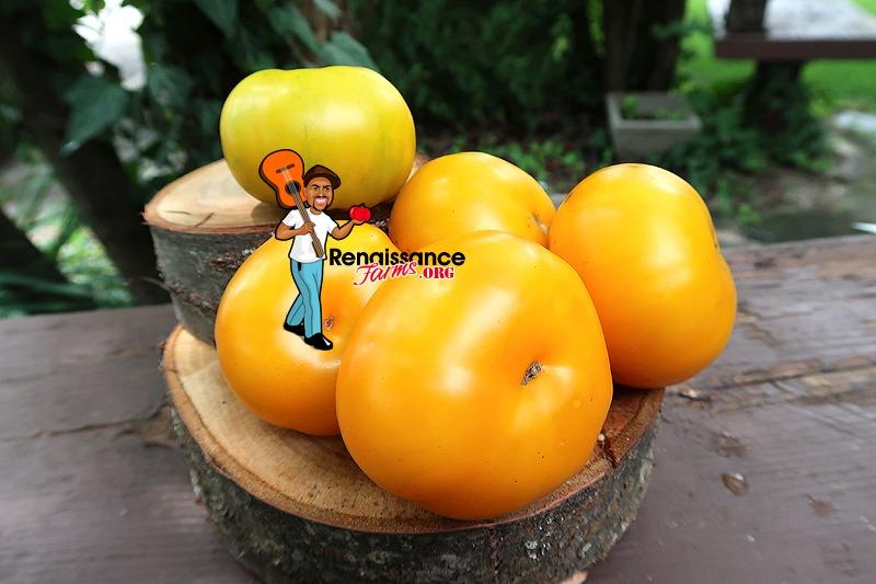 Big Orange From Amuz Tomato