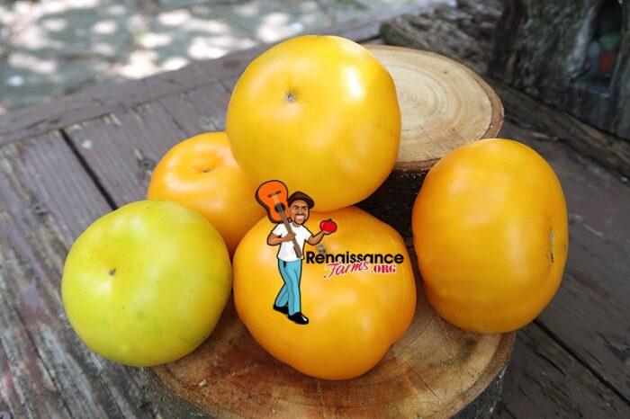 Big Orange From Amuz Tomato On Plate