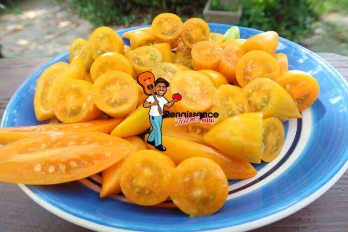 Blush 2.0 Tomato