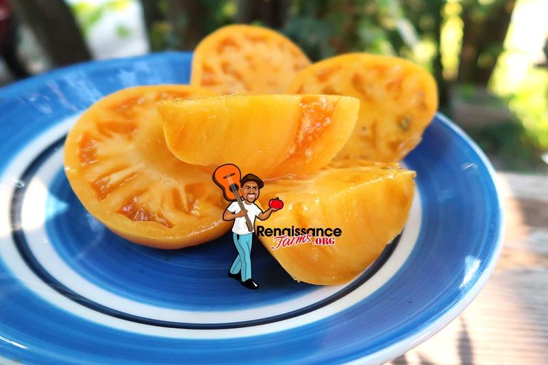 Apricot Brandywine Tomato