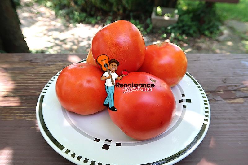 Byelorussian Tomato