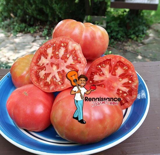 Carmin Violet Tomato