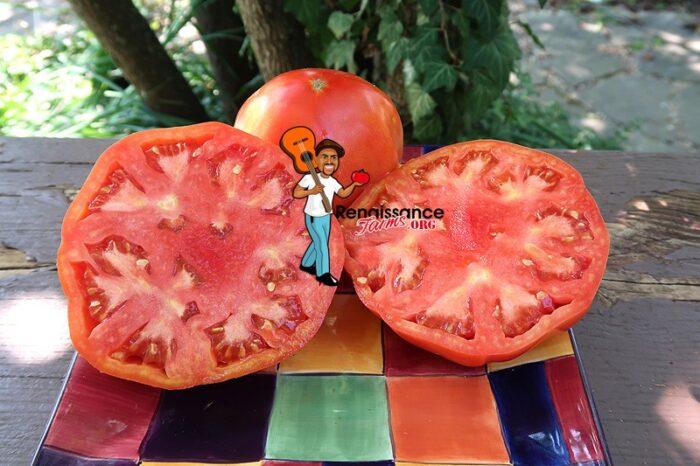 Church Tomato