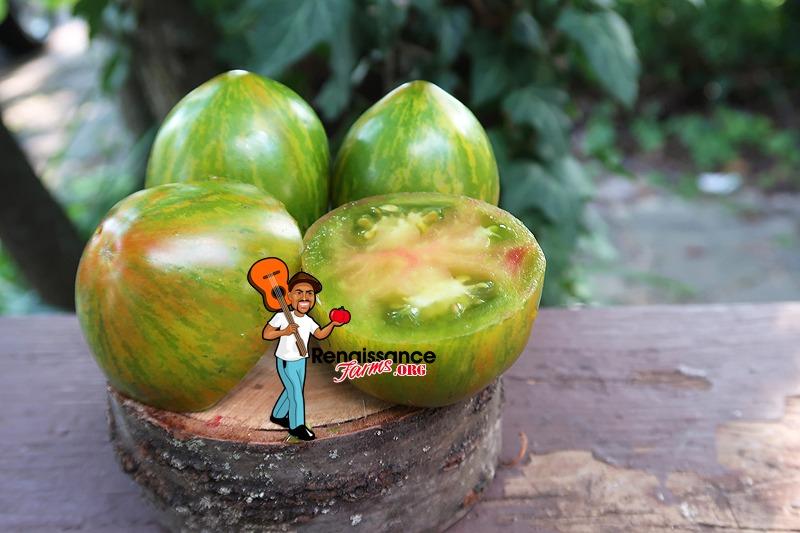 Coeur de Surpriz Tomato