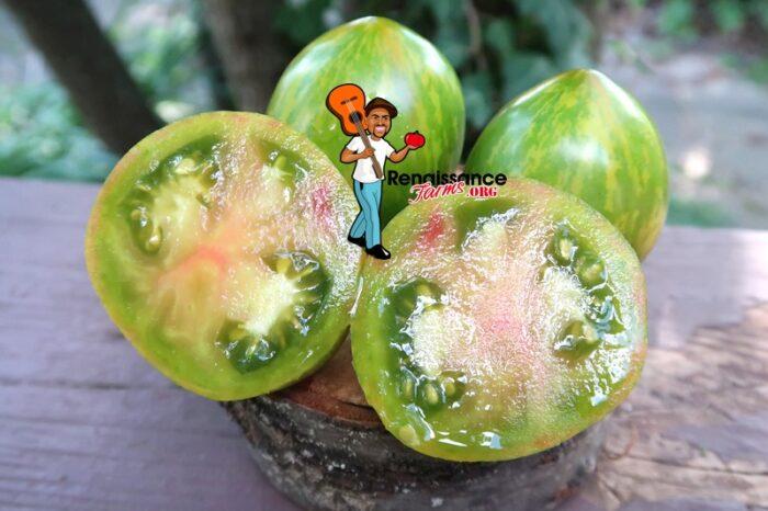 Coeur de Surpriz Tomato 2019