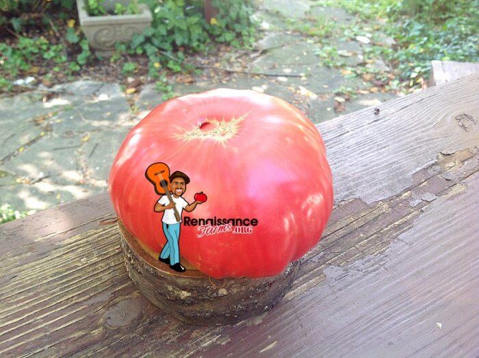 Domingo Tomato Very Lagge