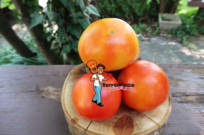 Dujon Burr Tomato Picture