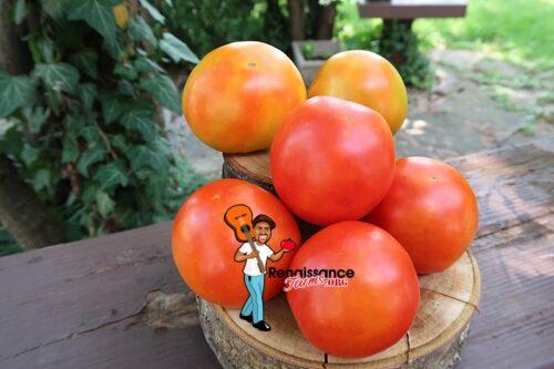 Dujon Burr Tomato