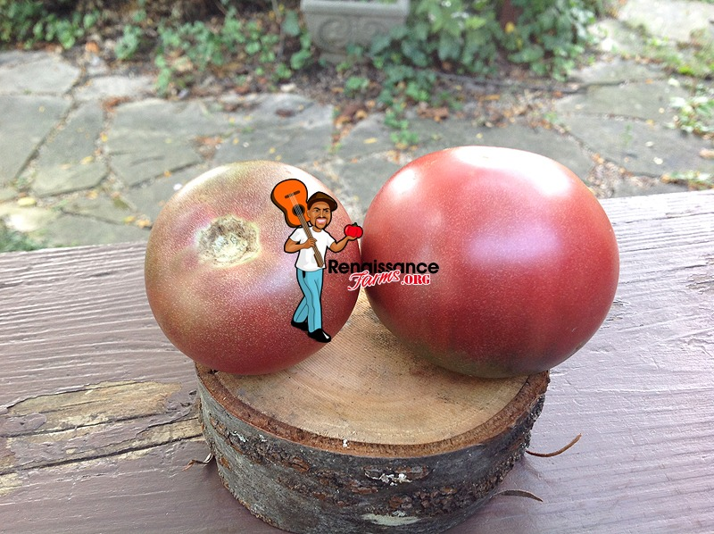 Dwarf Hazy's Dream Tomato