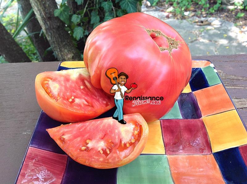 Epstein's Big Zac Tomato 2020