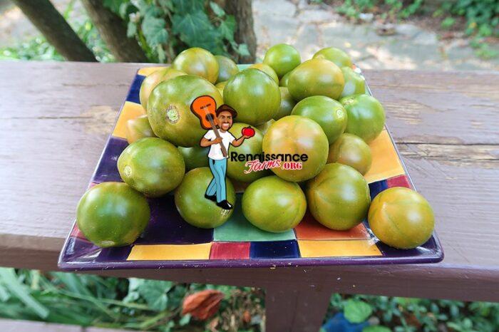 Evil Olive Tomato