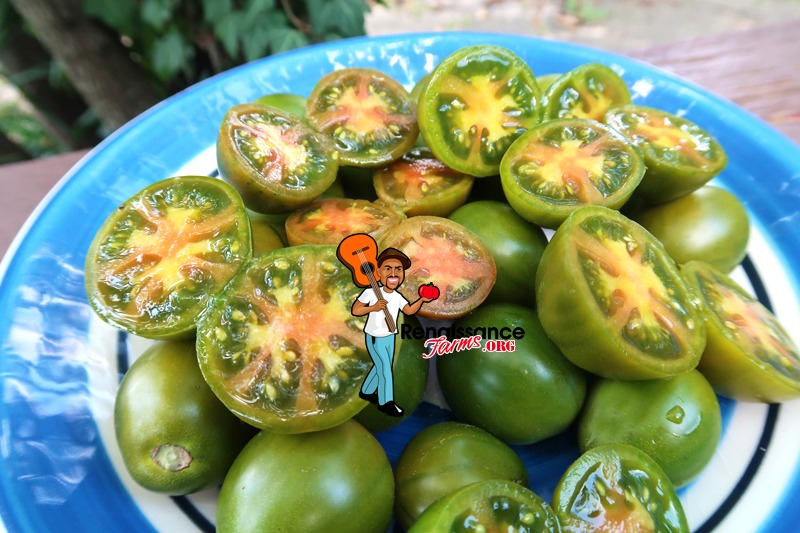 Evil Olive Tomato Green